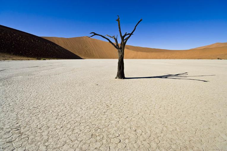 single-dry-tree-in-desert-death.jpg