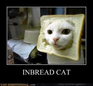 492x454px-LL-b4ae542b_demotivational-posters-inbread-cat.jpeg